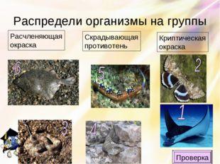 Распредели организмы на группы Криптическая окраска Скрадывающая противотень
