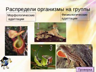 Распредели организмы на группы Морфологические адаптации Физиологические адап