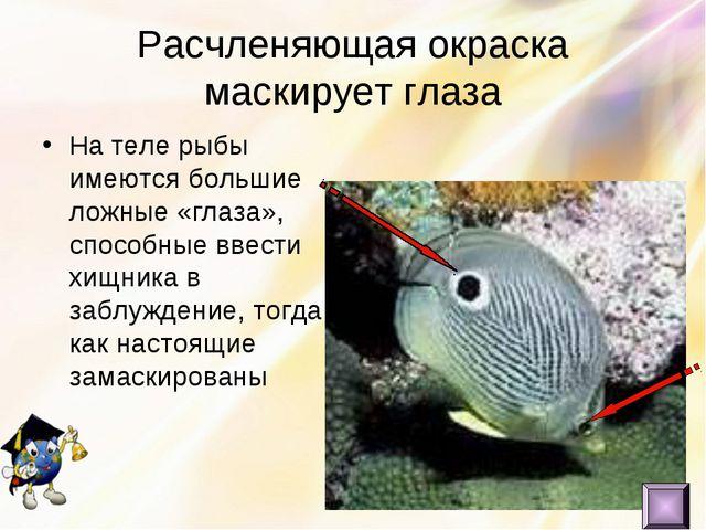 Расчленяющая окраска маскирует глаза На теле рыбы имеются большие ложные «гла...