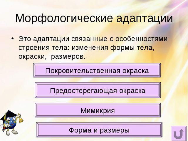 Морфологические адаптации Это адаптации связанные с особенностями строения те...