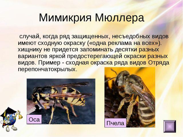 Мимикрия Мюллера случай, когда ряд защищенных, несъедобных видов имеют сходну...