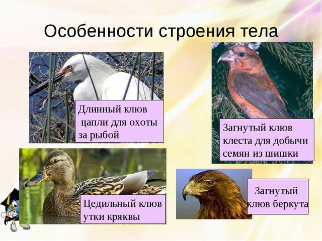 Особенности строения тела Цедильный клюв утки кряквы Загнутый клюв клеста для...