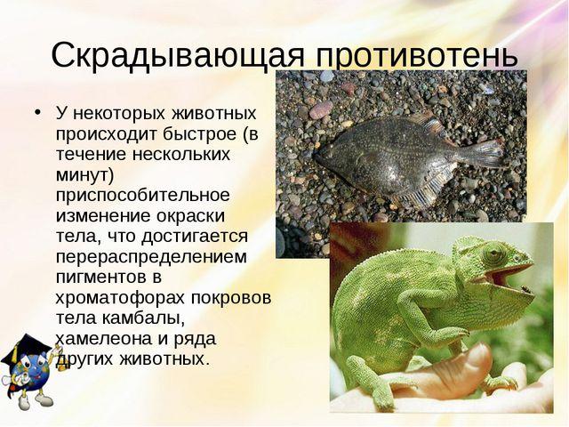 Скрадывающая противотень У некоторых животных происходит быстрое (в течение н...