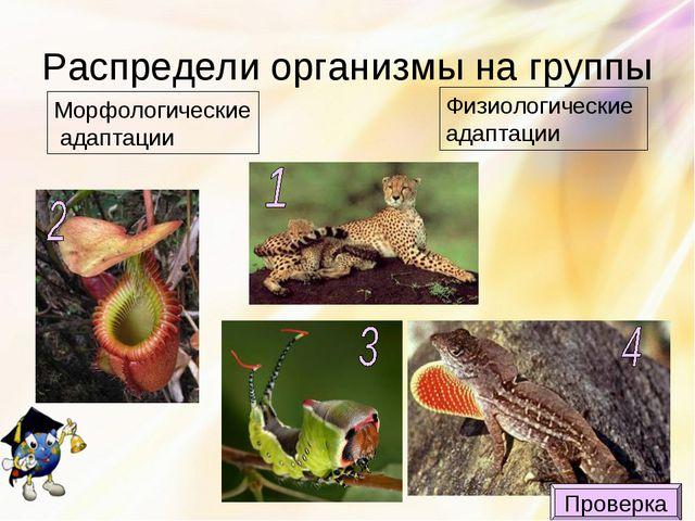 Распредели организмы на группы Морфологические адаптации Физиологические адап...