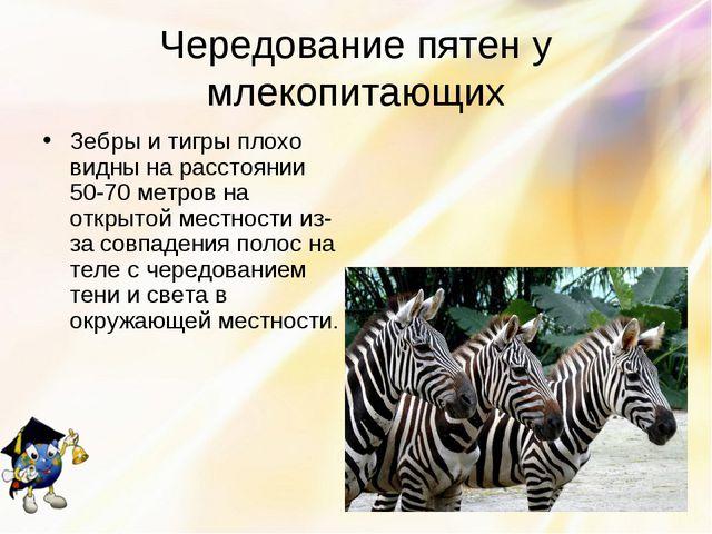 Чередование пятен у млекопитающих Зебры и тигры плохо видны на расстоянии 50-...