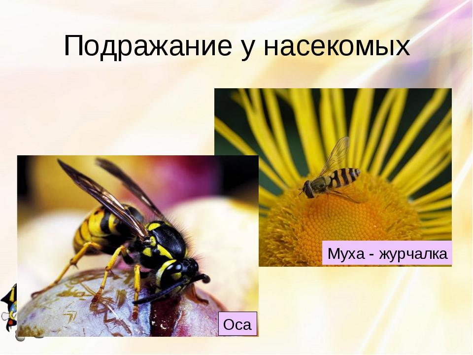 Подражание у насекомых Оса