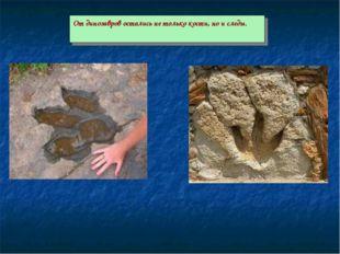 От динозавров остались не только кости, но и следы.