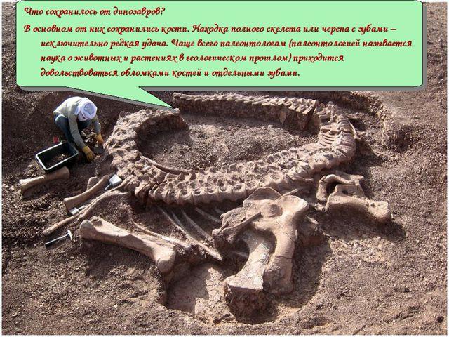 Что сохранилось от динозавров? В основном от них сохранились кости. Находка п...