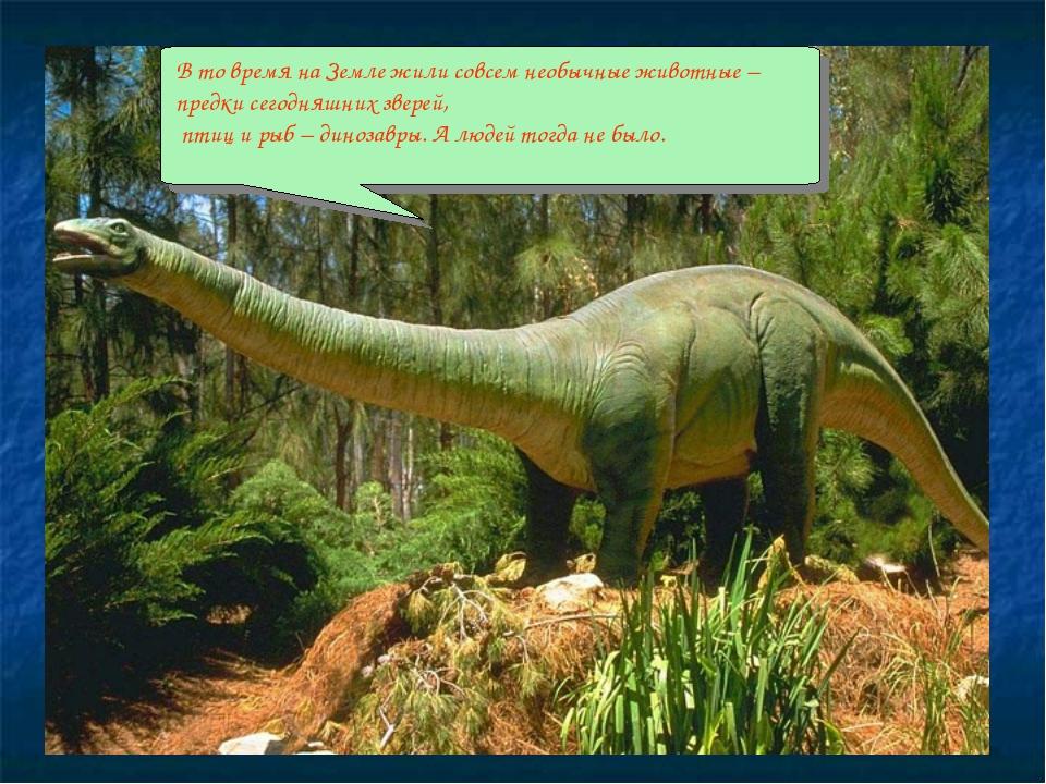 В то время на Земле жили совсем необычные животные –предки сегодняшних звере...