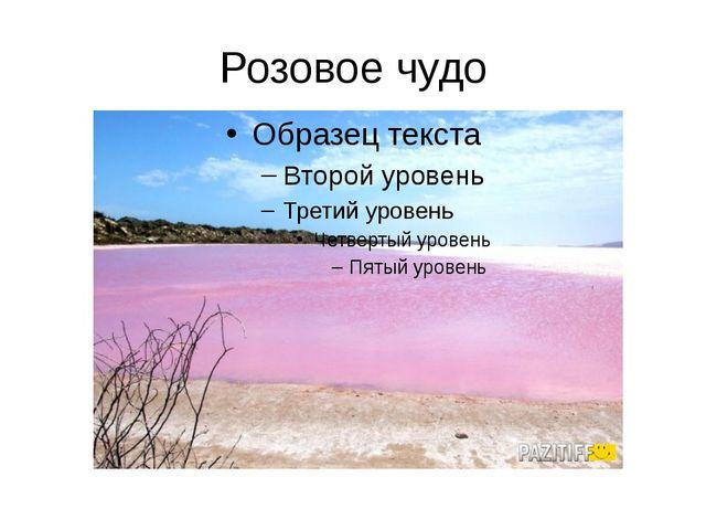 Розовое чудо
