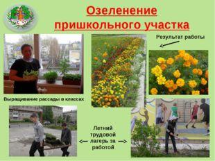 Озеленение пришкольного участка Выращивание рассады в классах Летний трудовой