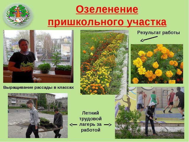 Озеленение пришкольного участка Выращивание рассады в классах Летний трудовой...
