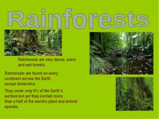 Rainforests are very dense, warm and wet forests. Rainforests are found on ev