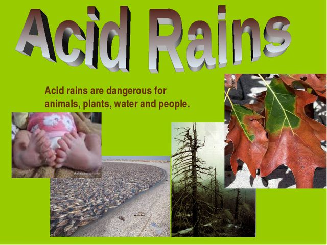 Acid rains are dangerous for animals, plants, water and people.