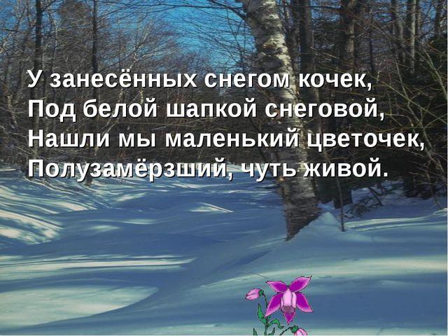 У занесённых снегом кочек, Под белой шапкой снеговой, Нашли мы маленький цвет...