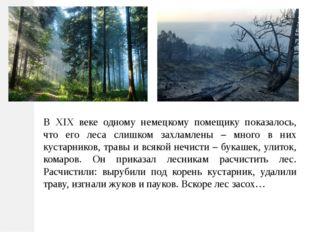 В XIX веке одному немецкому помещику показалось, что его леса слишком захламл