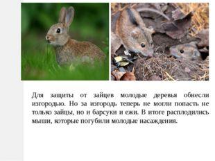 Для защиты от зайцев молодые деревья обнесли изгородью. Но за изгородь теперь