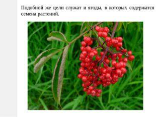 Подобной же цели служат и ягоды, в которых содержатся семена растений.
