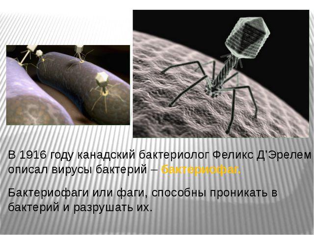 В 1916 году канадский бактериолог Феликс Д'Эрелем описал вирусы бактерий – ба...