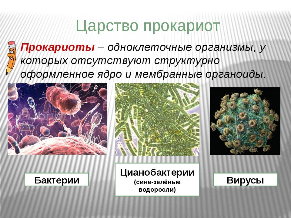 Царство прокариот Прокариоты – одноклеточные организмы, у которых отсутствуют...