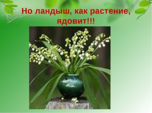 Но ландыш, как растение, ядовит!!! Даже выпитая вода, в которой стоял букет с