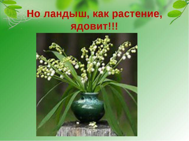 Но ландыш, как растение, ядовит!!! Даже выпитая вода, в которой стоял букет с...