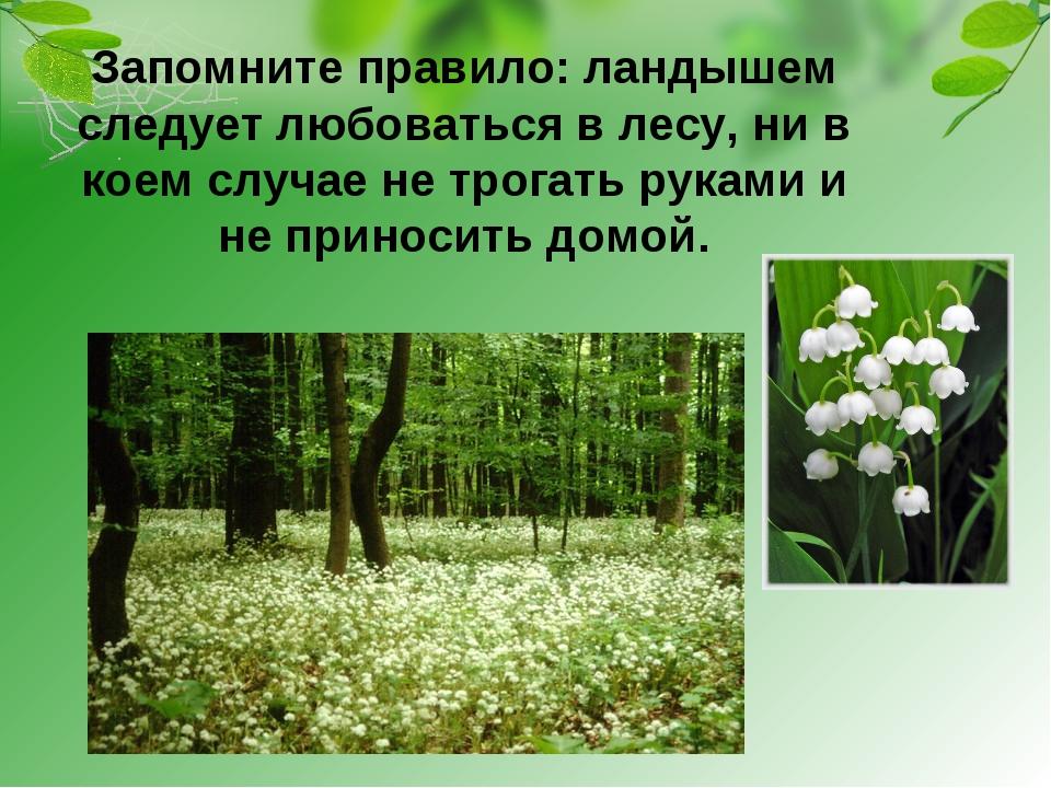 Запомните правило: ландышем следует любоваться в лесу, ни в коем случае не тр...