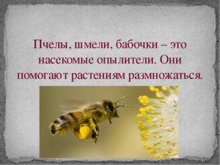 Пчелы, шмели, бабочки – это насекомые опылители. Они помогают растениям размн