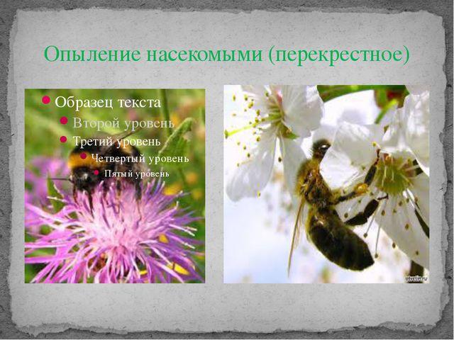 Опыление насекомыми (перекрестное)