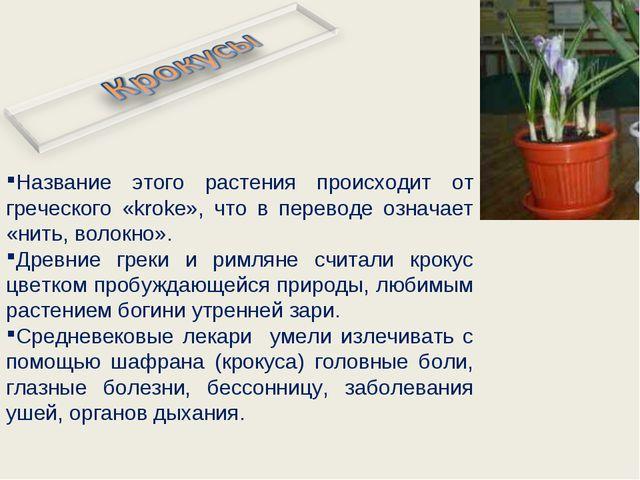 Название этого растения происходит от греческого «kroke», что в переводе озна...
