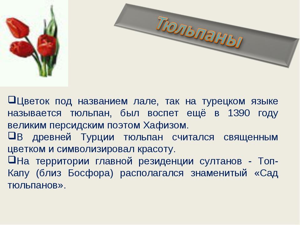 Цветок под названием лале, так на турецком языке называется тюльпан, был восп...