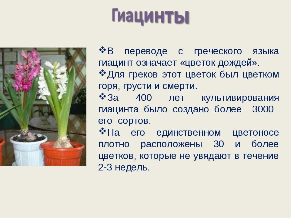 В переводе с греческого языка гиацинт означает «цветок дождей». Для греков эт...