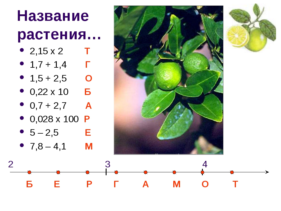 Название растения… 2,15 х 2 Т 1,7 + 1,4 Г 1,5 + 2,5 О 0,22 х 10 Б 0,7 + 2,7 А...