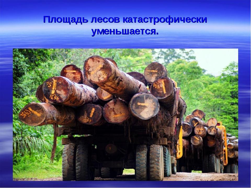 Площадь лесов катастрофически уменьшается.