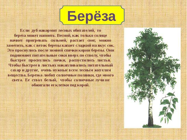 Если дуб накормит лесных обитателей, то береза может напоить. Весной, как то...