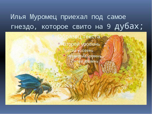 Илья Муромец приехал под самое гнездо, которое свито на 9 дубах;