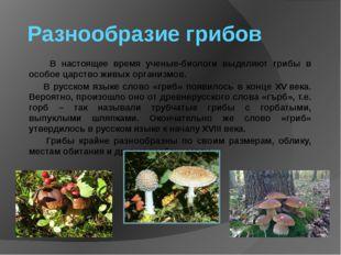 Разнообразие грибов В настоящее время ученые-биологи выделяют грибы в особое