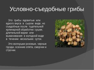 Условно-съедобные грибы Это грибы ядовитые или едкого вкуса в сыром виде, но