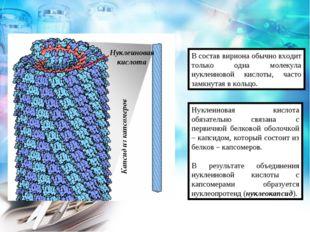 В состав вириона обычно входит только одна молекула нуклеиновой кислоты, част