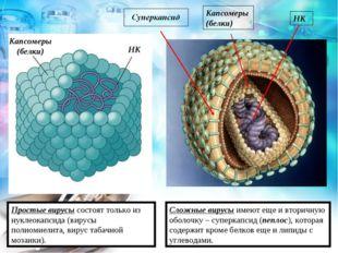 Капсомеры (белки) НК Простые вирусы состоят только из нуклеокапсида (вирусы п