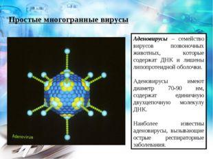 Простые многогранные вирусы Аденовирусы – семейство вирусов позвоночных живот