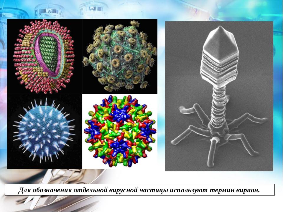 Для обозначения отдельной вирусной частицы используют термин вирион.