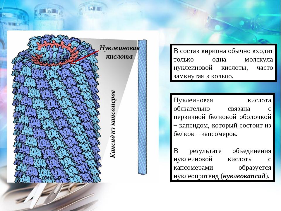 В состав вириона обычно входит только одна молекула нуклеиновой кислоты, част...