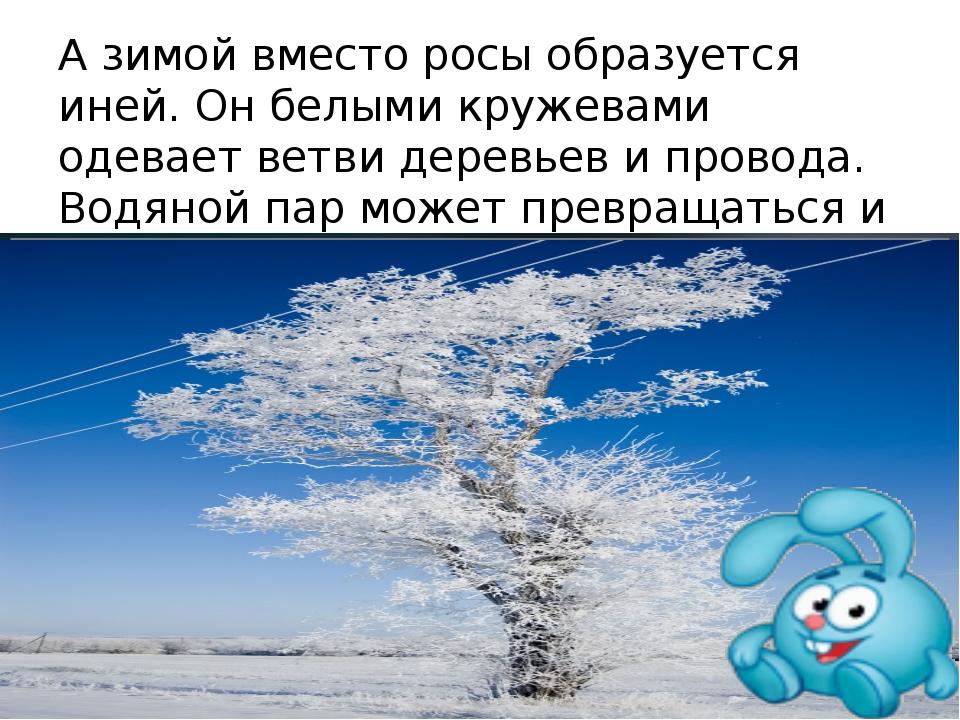 А зимой вместо росы образуется иней. Он белыми кружевами одевает ветви деревь...