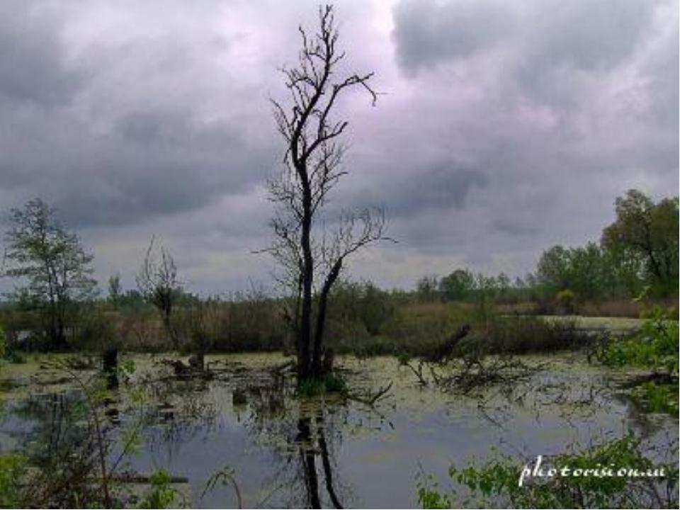 В углублениях суши образуются озера и болота.