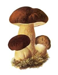 http://usiter.com/uploads/20120329/muhomor+gribi+68518681096.jpg