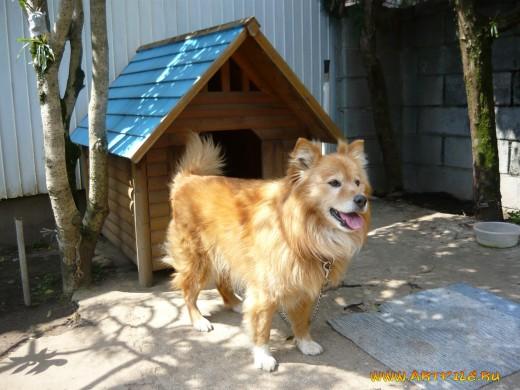 Обои Собаки собачья будка Животные Фото 309070