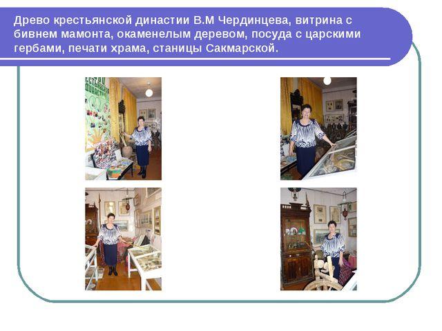 Древо крестьянской династии В.М Чердинцева, витрина с бивнем мамонта, окамене...