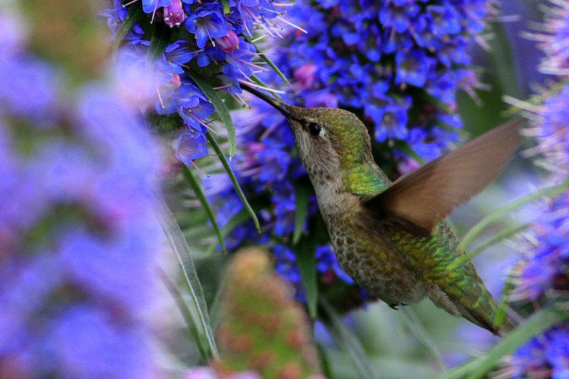 красивые фотографии колибри