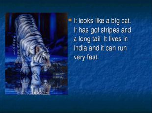 It looks like a big cat. It has got stripes and a long tail. It lives in Indi